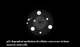 p21-dependent mediation of cellular senescence in bone marro