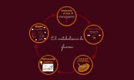 Vías metabólicas de la glucosa