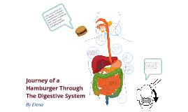 Copy of Journey of Hamburger
