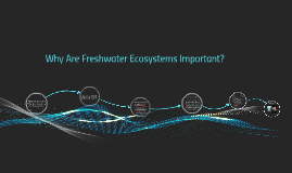 Why Are Freshwater Ecosystems Important?