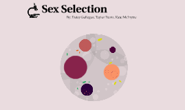 Sex Selection