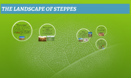 THE LANDSCAPE OF STEPPES