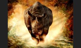 http://www.google.com/url?sa=i&rct=j&q=rhino&source=images&c