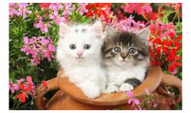 los gaticos