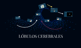 Copy of Copy of LÓBULOS CEREBRALES