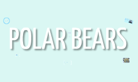 Copy of POLAR BEARS