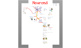 Copy of Copy of AP Bio- Physiology 7: Neurons