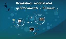 Organismos modificados genéticamente - Animales -