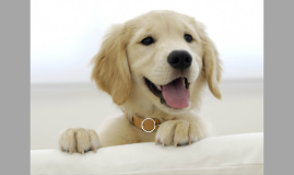 Copy of Prezi Dog Template