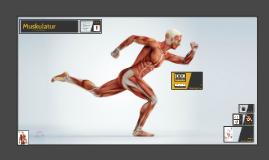Copy of Copy of Anatomie der Muskulatur