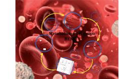 Copy of Metabolismo del grupo hemo