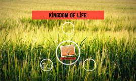 Kingdom of life