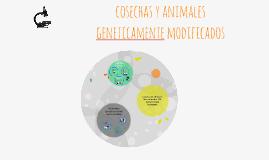 cosechas y animales   geneticamente modificados
