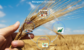 Recogiendo la cosecha