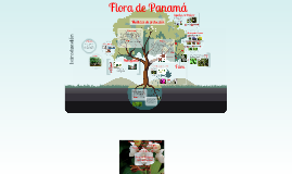Copy of Biodiversidad del istmo de Panamá