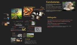 Control biológico mediante el uso de Pleurotus ostreatus com