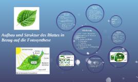 Aufbau und Struktur des Blattes in Bezug auf die Fotosynthes