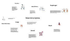 respiratory system by Connor Ashdown