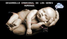 Copy of PLEGAMIENTO DEL EMBRIÓN Y FASES DEL DESARROLLO EMBRIONARIO