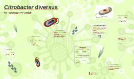 Citrobacter diversus orignal