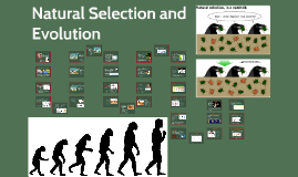 Natural Selection & Evolution