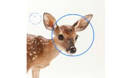 deers  need