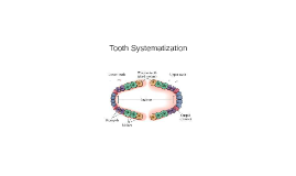 Tooth Systematization