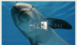 Delfinfang in Taiji