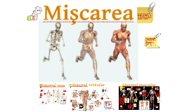 Copy of Copy of Miscarea - rafinata