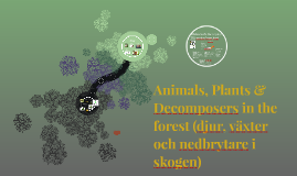 Animals, Plants & Decomposers in the forest (djur, växter oc