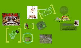 Copy of Las Arañas