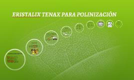 ERSITALIX TENAX PARA POLINIZACIÓN