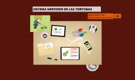 Copy of Sistema Nervioso de las Tortugas