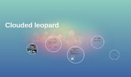 leopardo nebulosa