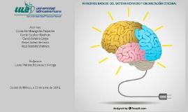 Copy of Principios básicos del Sistema Nervioso y Organización Cerebral