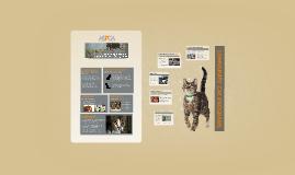 Community Cats and Community Cat Programs: ASPCA Position Statement
