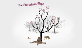 The Sumatran Tiger
