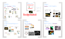 Physiology 11:  Responses