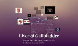 1st Hour Liver and Gall Bladder