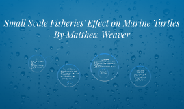 Small Scale Fisheries' Effect on Marine Turtles