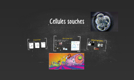 101BT6HY-Cellules souches