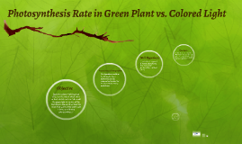 Light Color on the Effect on Photosynthesis Rate
