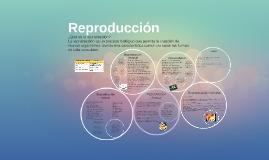 Copy of Reproduccion