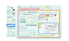 Metabolisme: Deel 3 - Dissimilatie