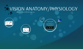 VISION ANATOMY/PHYSIOLOGY