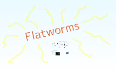 Copy of Flatworms