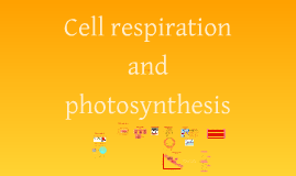 IB biology: Cell respiration and photosynthesis