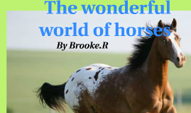 the wonderful world of horses