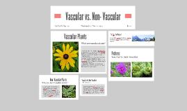 Vascular vs. Non- Vascular