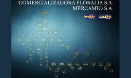 Organigrama MercaMio